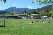 Memorial Park field