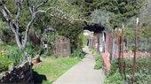Robson Park garden