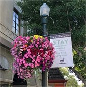 photo of flower basket downtown