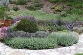 Fire-Smart an establish garden