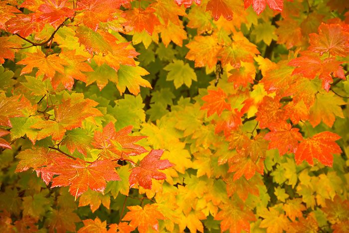 oregon_fall_colors