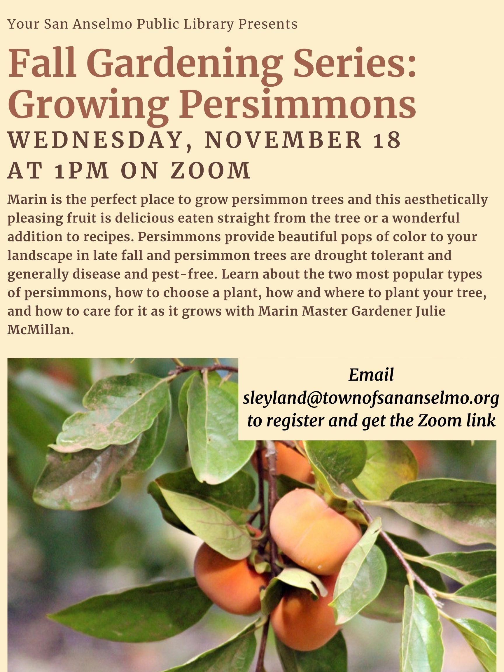111820 Growing Persimmons